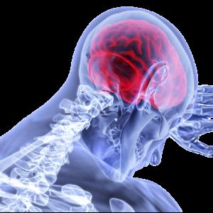 HSE Study inflammation Brain tissue damage